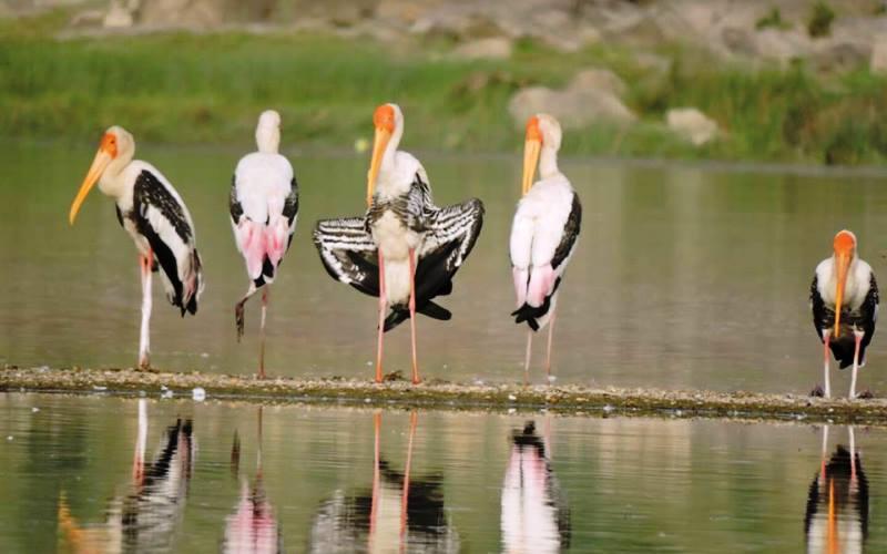Birding, Bharatpur