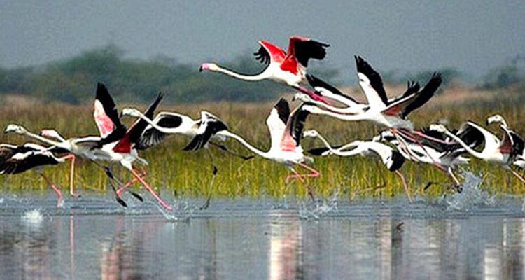 Birding, Ranthambore