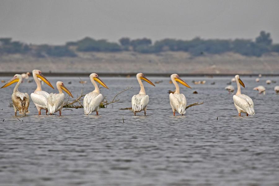 Birding, Jawai