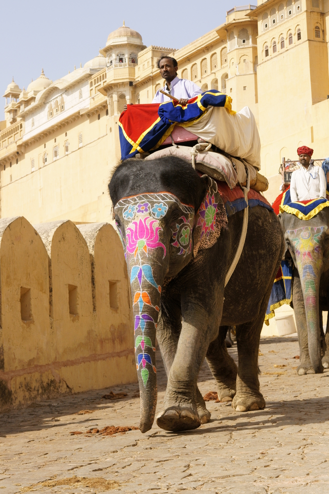 Jaipur India March Decorated Elephant Descends Fro