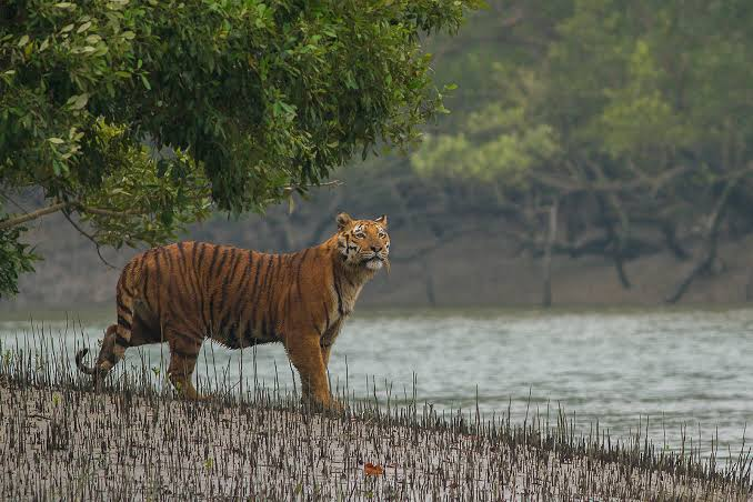 Golden Triangle with Sunderbans