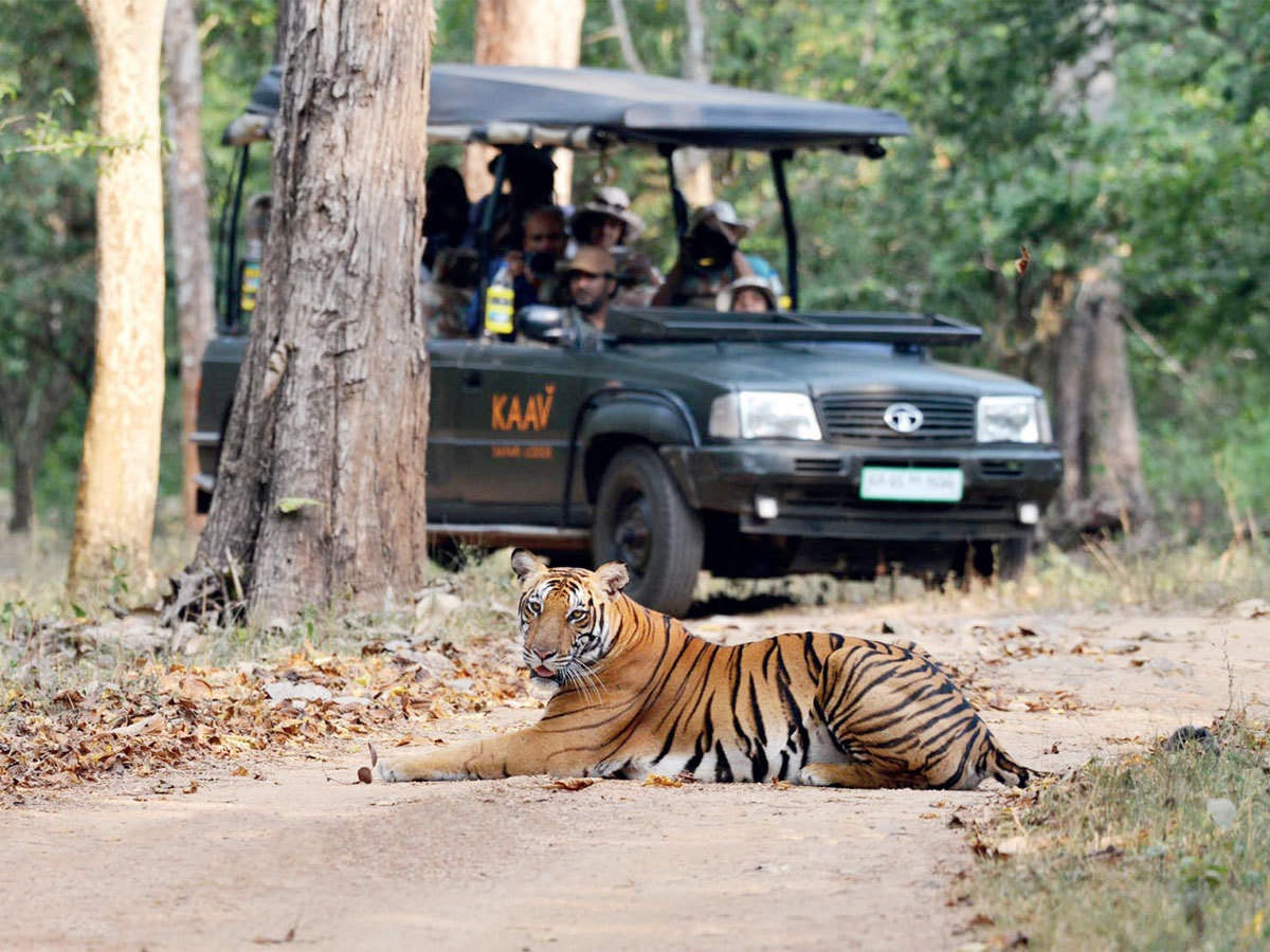 Tiger Safari in India at the Ranthambore National Park