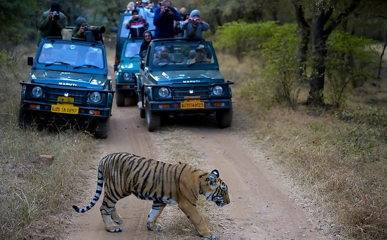 Tiger Spotting In Ranthambore