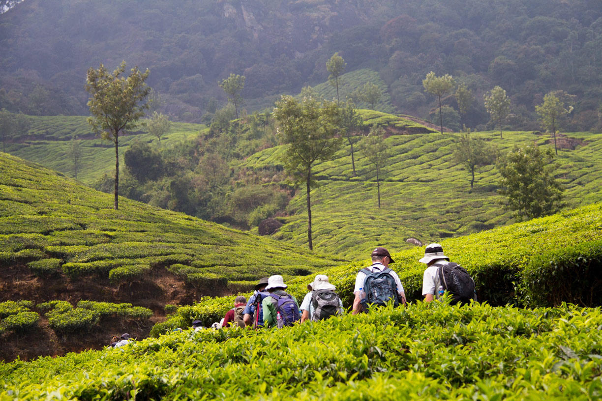 Spices and Tea Trails Trek in Kerala